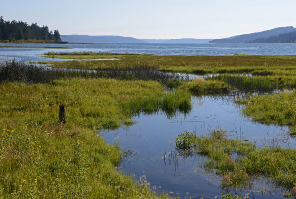 What are wetlands and how do they affect us?