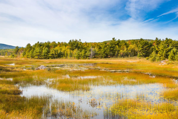 The protection and conservation of wetlands